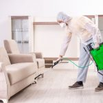Which is Best? Professional Versus Do-It-Yourself Pest Control