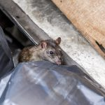 6 Things You Need to Know About Pest Control in Dubai