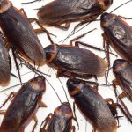 The Need Of Pest Control And The Importance Of Professional Pest Control Services